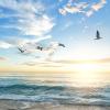 Ocean, sky, birds, & freedom. Five reasons to be a Muslim