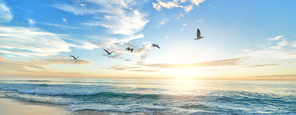 Ocean, sky, birds, & freedom. Five reasons to be a Muslim
