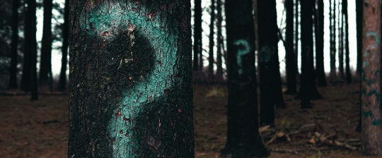 Forest tress with question marks, World questions and Islam answers